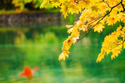 軽井沢の雲場池 紅葉の風景