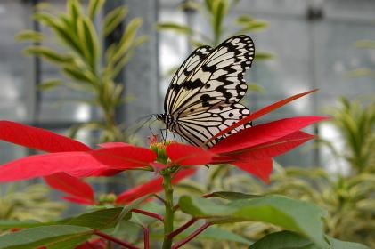 花に寄り添う蝶