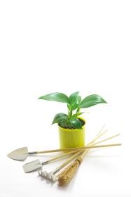 白バックに鉢植えのフィロデンドロンとミニチュアの園芸用品 縦長