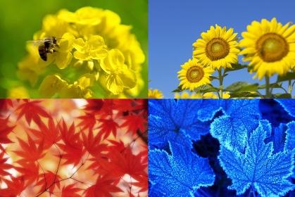 四季の植物