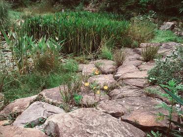 庭の石の道とブッシュ