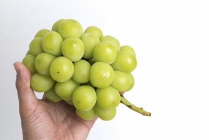 ブドウ シャインマスカット
