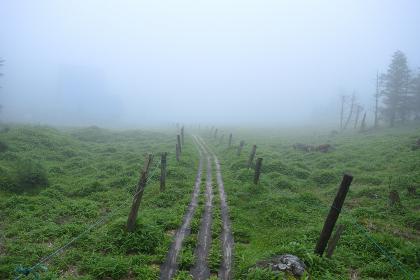 八ヶ岳の登山路から眺める風景(樹林・苔・花・緑)