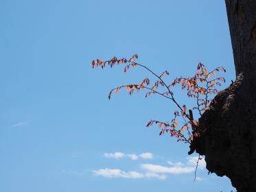 大木から伸びた枝に今年初めての新緑が照り映える
