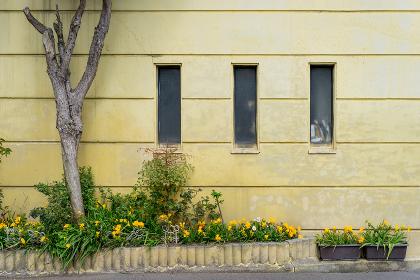 黄色の壁面と樹木と窓
