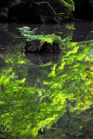 金剛輪寺 新緑の庭の池 滋賀県
