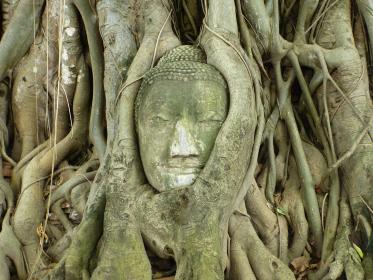 タイ・バンコク近郊のアユタヤ遺跡にて仏像ワットマハタートのクローズアップ