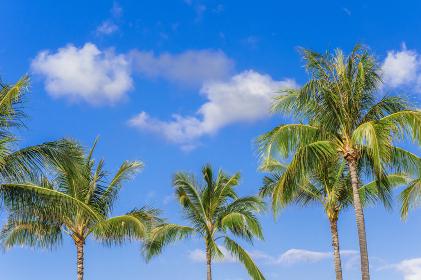 ヤシの木と青空。ハワイのイメージ。
