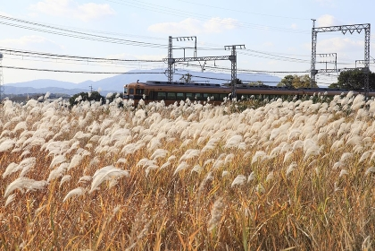 ススキと電車
