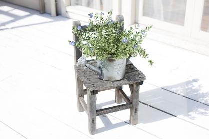 小さなイスの上に置いた観葉植物