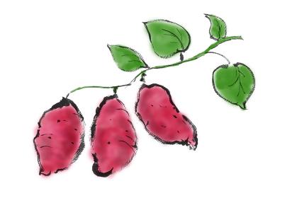 手描きイラスト素材 植物 さつまいも, サツマイモ, さつま芋