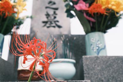 お墓の線香と綺麗な彼岸花