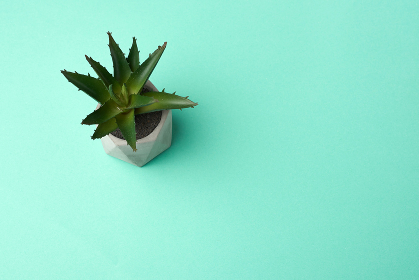 ceramic pot with growing aloe on a green background, top view