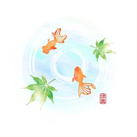 暑中見舞い・残暑見舞いで使える夏の風物詩 水彩イラスト / 金魚とモミジの葉