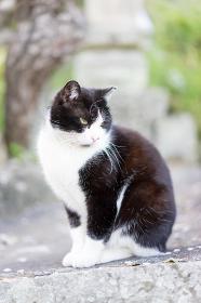 石垣の上の猫