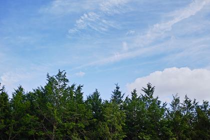 杉林と白い雲のある秋の青空