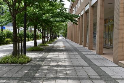 臨海副都心の住宅街の歩道