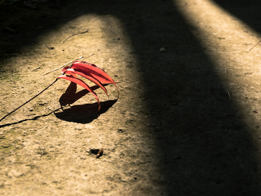 光に包まれた紅葉した一枝
