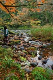秋の山中温泉の鶴仙渓を眺める女性