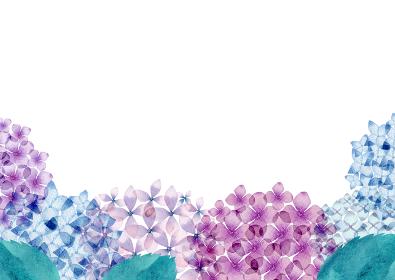 あじさい 花 フレーム 背景 水彩 イラスト