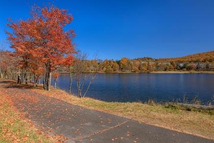 長野県・立科町 秋の女神湖の風景