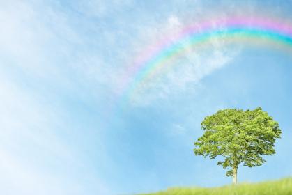 虹のかかった青空と一本の木
