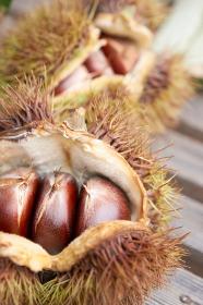 収穫した毬栗のアップと栗の実