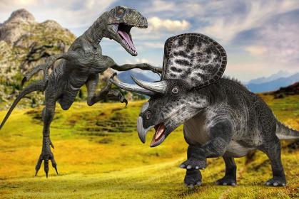 高原で黒っぽいトリケラトプスを攻撃する小型の肉食恐竜