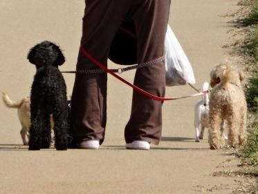 ペットの散歩で巻き付いたリード
