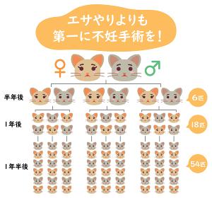 地域猫TNRの説明イラスト エサやりより不妊手術