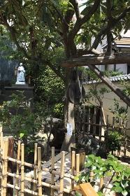 寺田屋の井戸