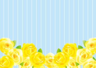 黄色のバラのありがとう背景