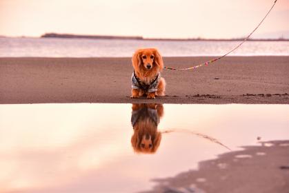 水鏡に映る犬