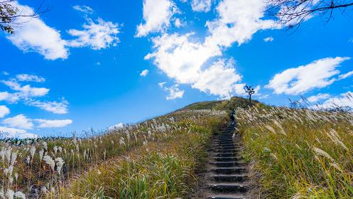 兵庫県 砥峰高原 ススキ