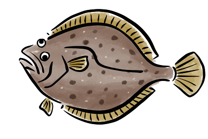 ヒラメ ひらめ 平目 筆 魚 手描き