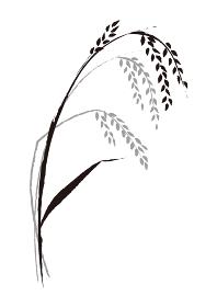 稲の墨絵 ベクターイラスト